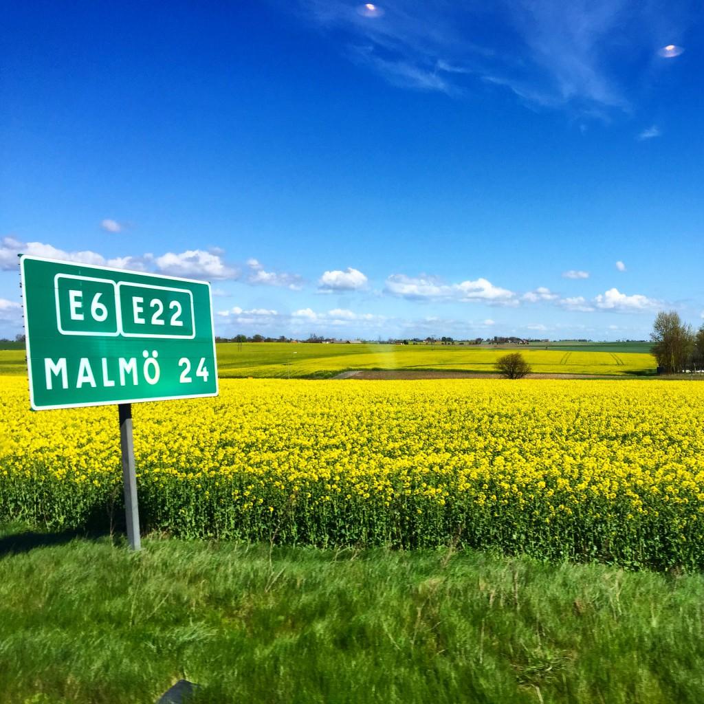 Malmo_rapsfalt_skane_Dennis_Widmark_blogg
